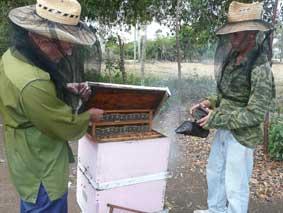 Cumplen apicultores de Ciego de Ávila su plan anual