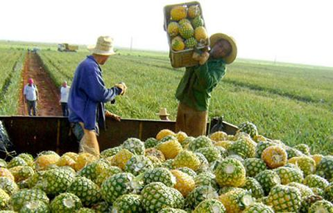 Campesinos de Ciego de Ávila, ejemplos en la producción de alimentos